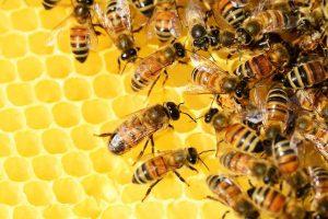 Realna promocja kondycji, czyli produkty pszczele